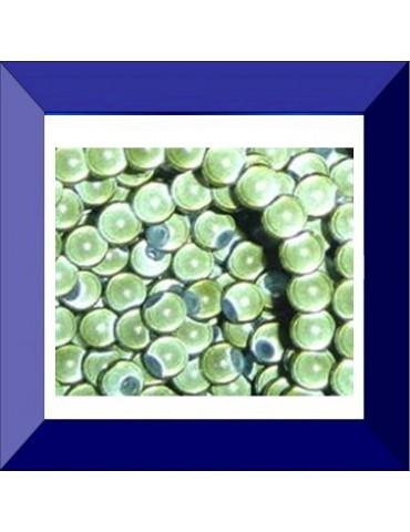 Perle en verre 4 mm RM Khaki